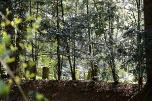 Jüdischer Friedhof Hemsbach